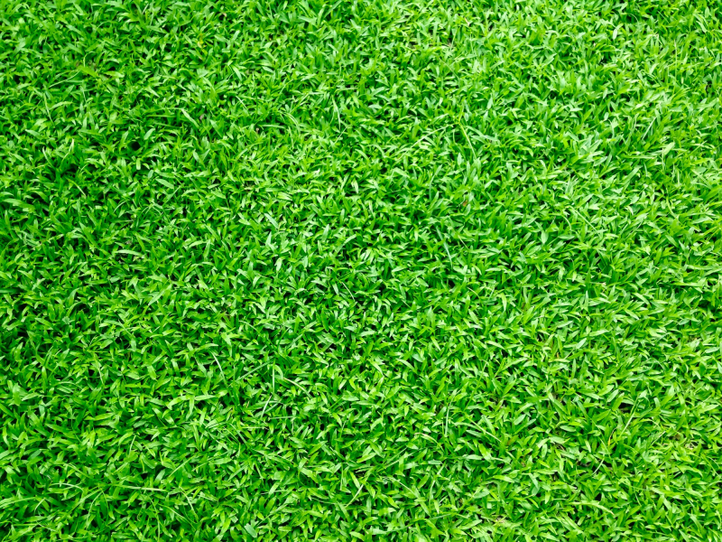 Fake grass colour and quality